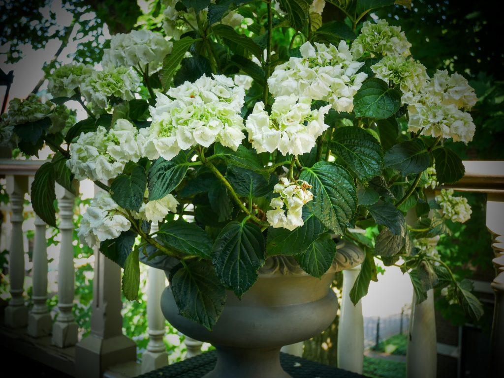 Kamer3_HQ_balkon-bloemen